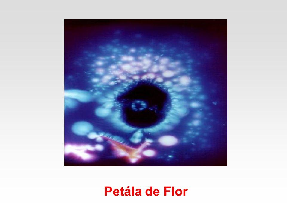 Petála de Flor