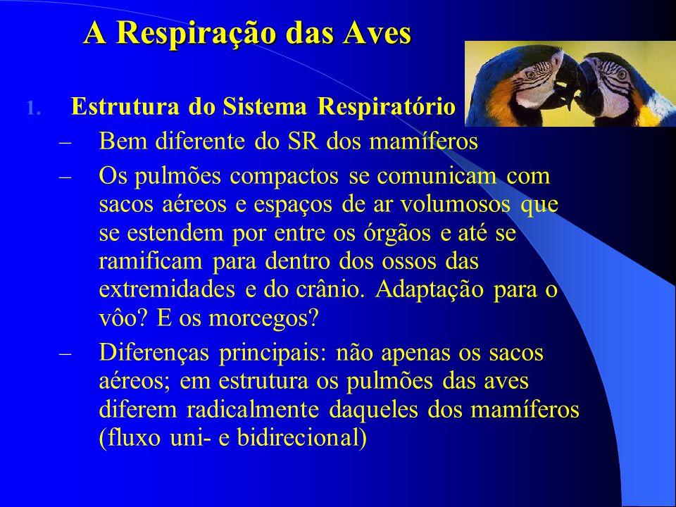 A Respiração das Aves Estrutura do Sistema Respiratório
