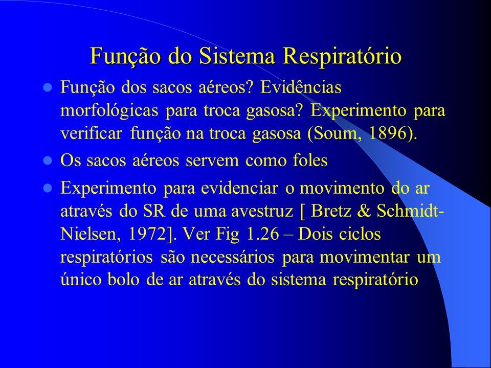 Função do Sistema Respiratório