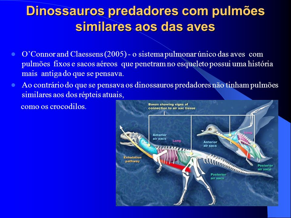 Dinossauros predadores com pulmões similares aos das aves