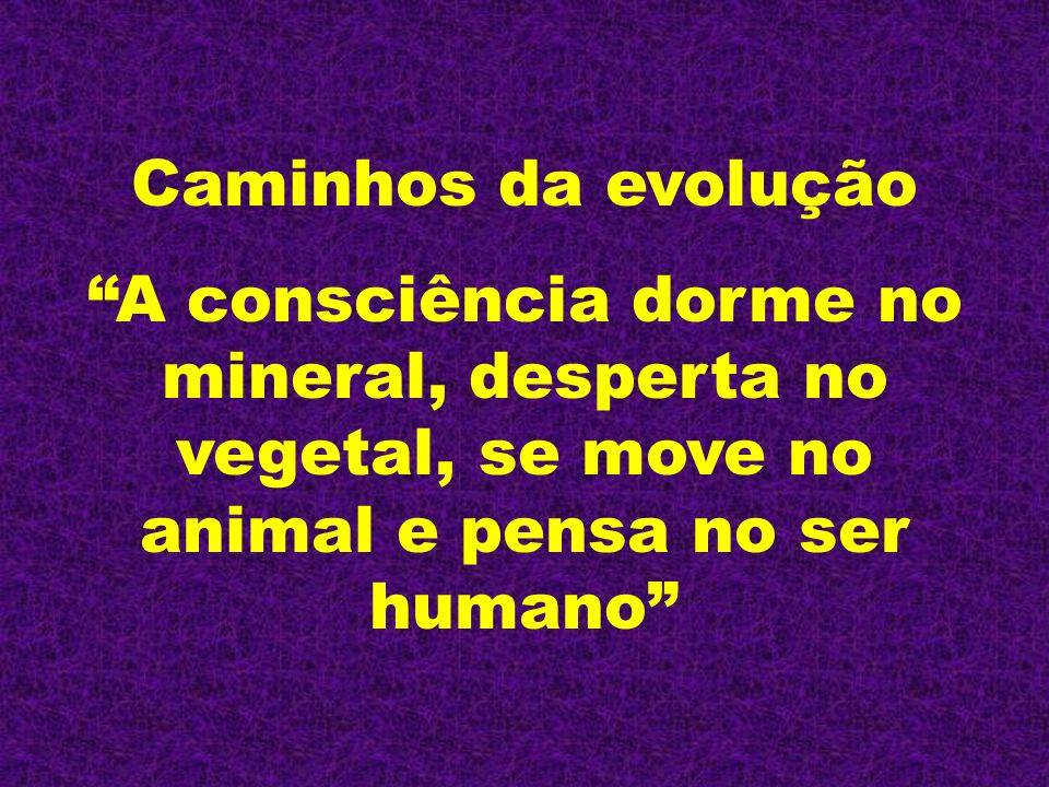 Caminhos da evolução A consciência dorme no mineral, desperta no vegetal, se move no animal e pensa no ser humano