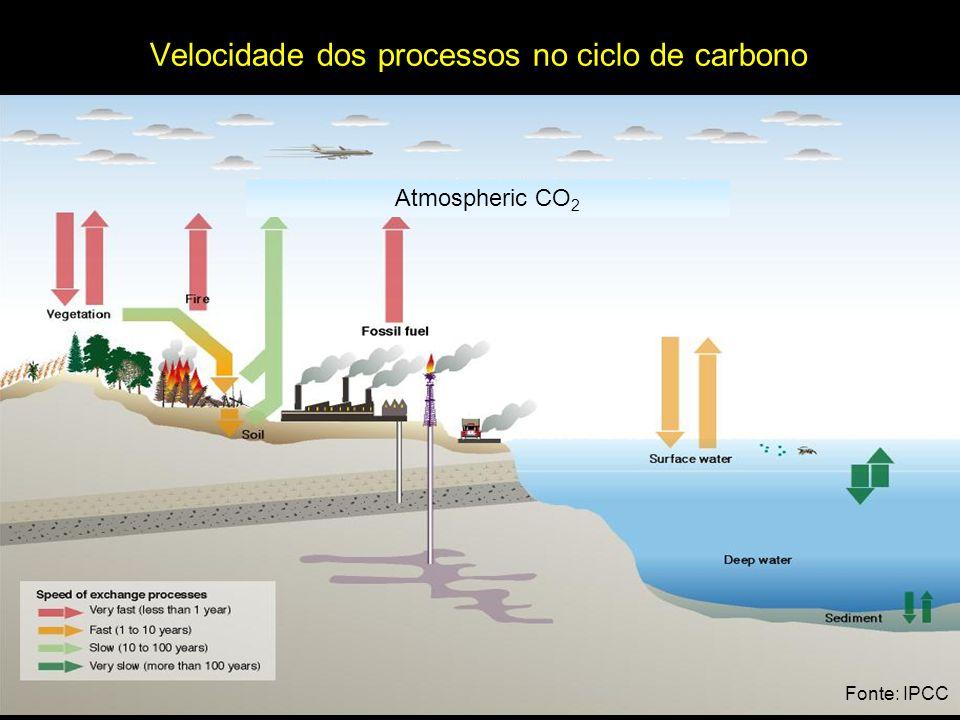 Velocidade dos processos no ciclo de carbono