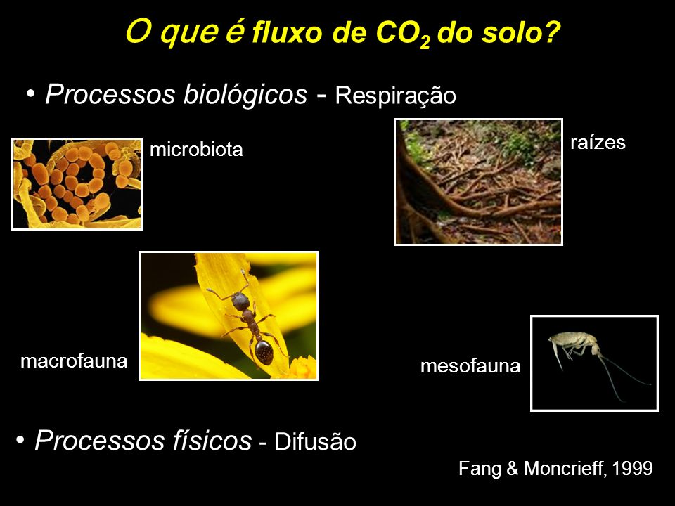 O que é fluxo de CO2 do solo