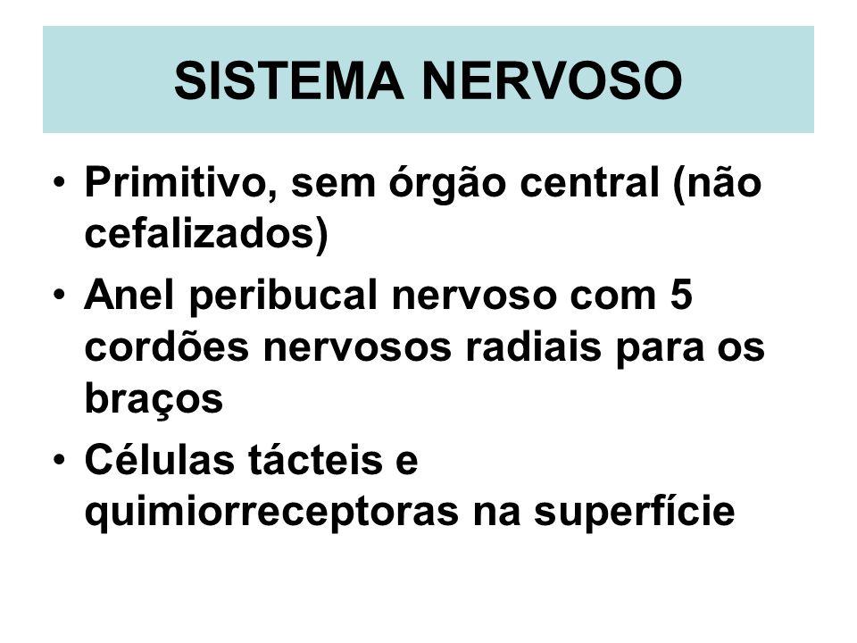 SISTEMA NERVOSO Primitivo, sem órgão central (não cefalizados)