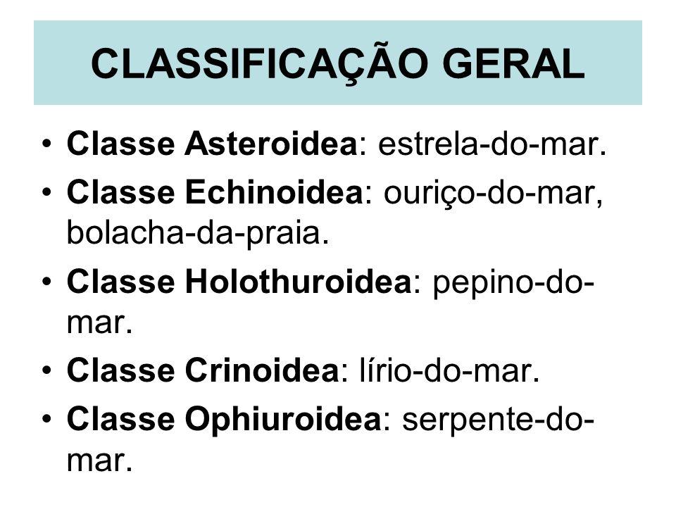 CLASSIFICAÇÃO GERAL Classe Asteroidea: estrela-do-mar.
