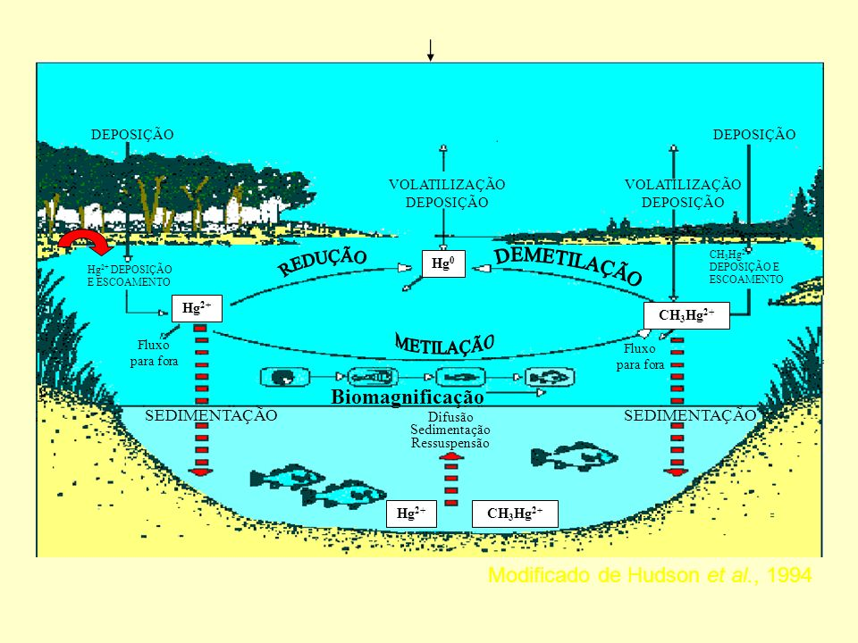 Modificado de Hudson et al., 1994