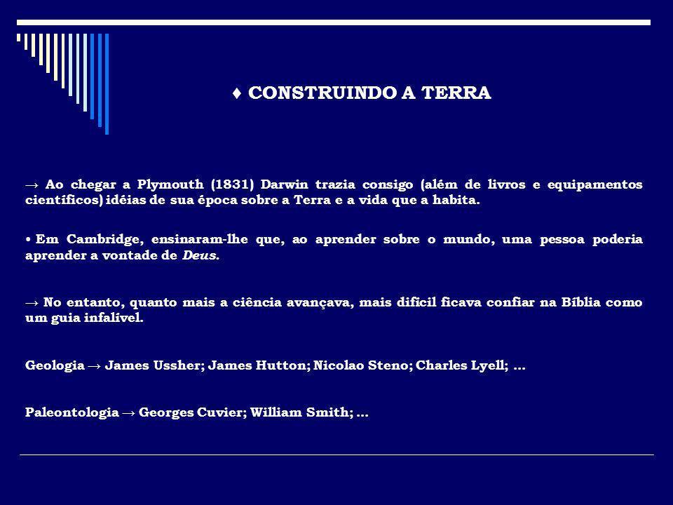 ♦ CONSTRUINDO A TERRA