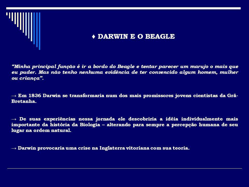 ♦ DARWIN E O BEAGLE