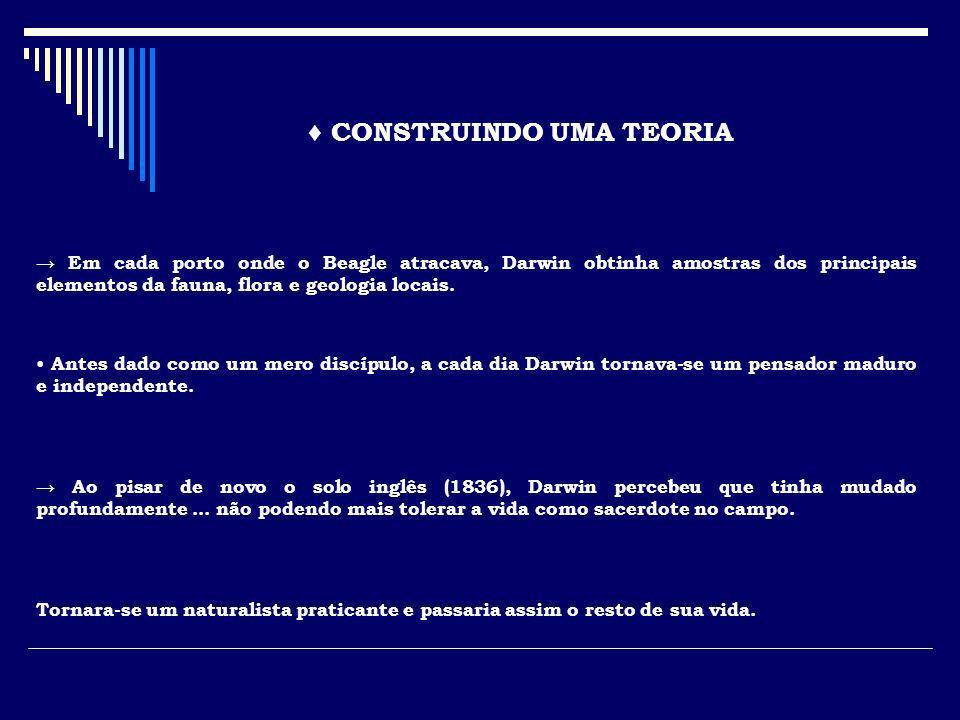 ♦ CONSTRUINDO UMA TEORIA