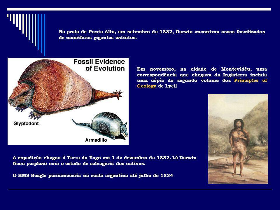 Na praia de Punta Alta, em setembro de 1832, Darwin encontrou ossos fossilizados de mamíferos gigantes extintos.