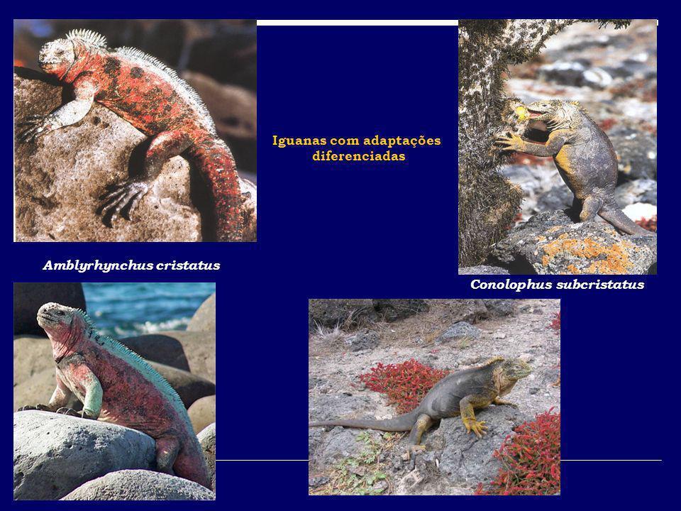 Iguanas com adaptações