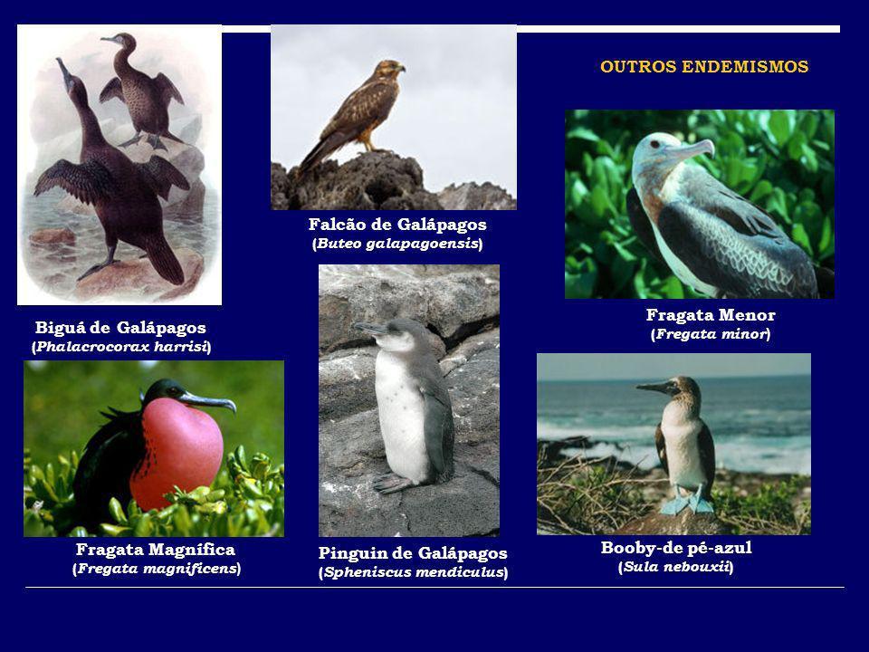OUTROS ENDEMISMOS Falcão de Galápagos Fragata Menor Biguá de Galápagos