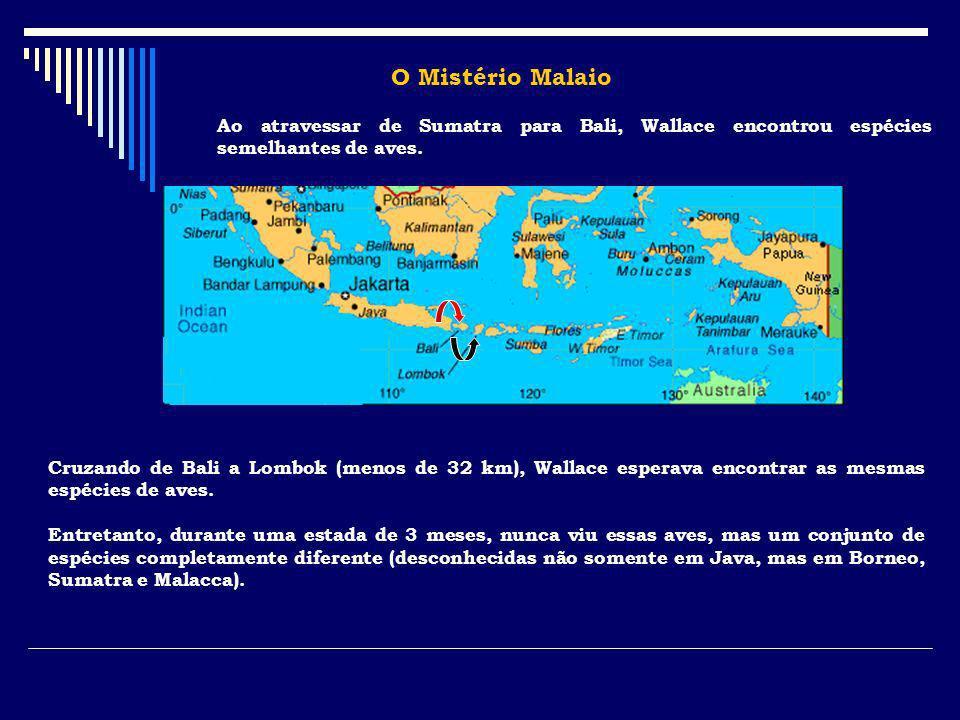O Mistério MalaioAo atravessar de Sumatra para Bali, Wallace encontrou espécies semelhantes de aves.
