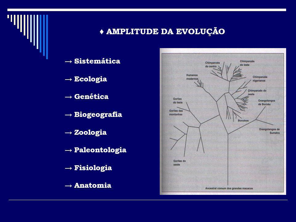 ♦ AMPLITUDE DA EVOLUÇÃO