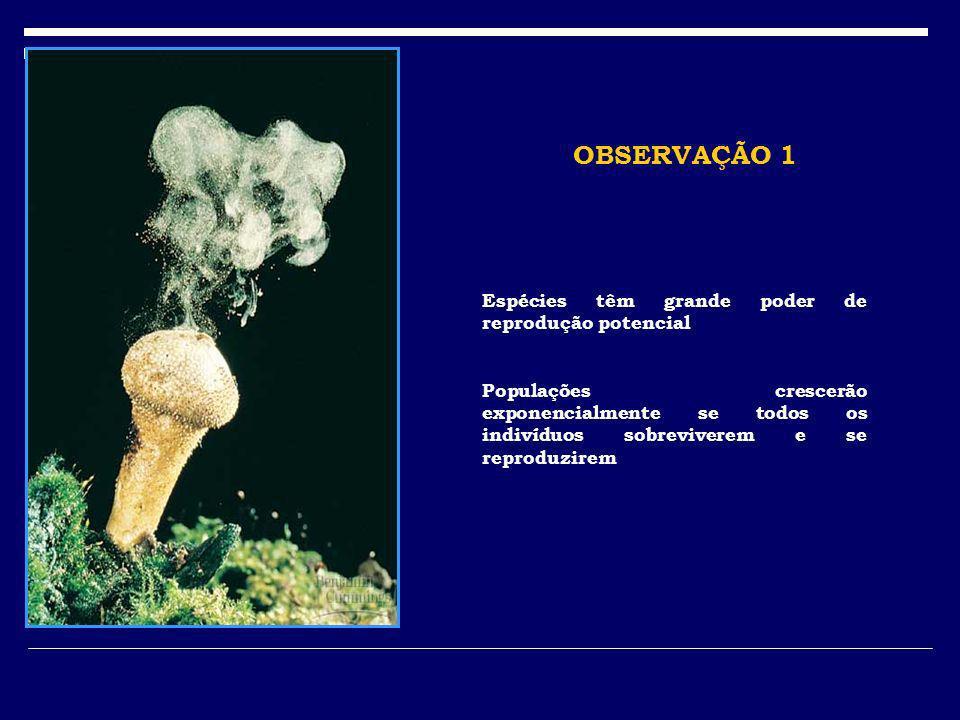OBSERVAÇÃO 1 Espécies têm grande poder de reprodução potencial