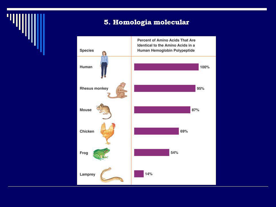 5. Homologia molecular