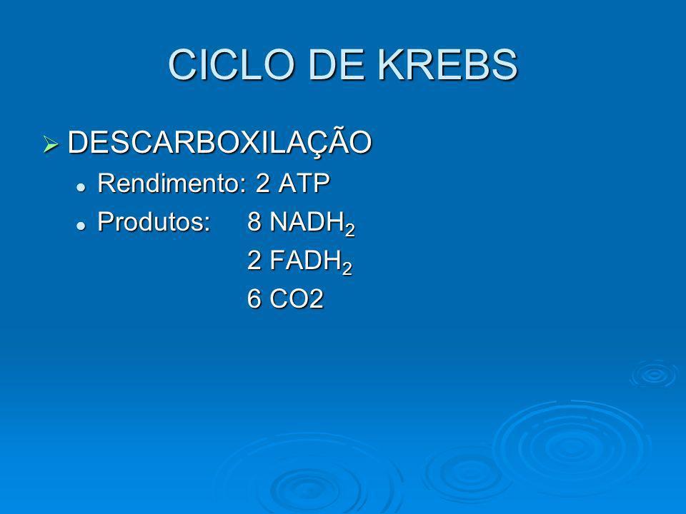 CICLO DE KREBS DESCARBOXILAÇÃO Rendimento: 2 ATP Produtos: 8 NADH2
