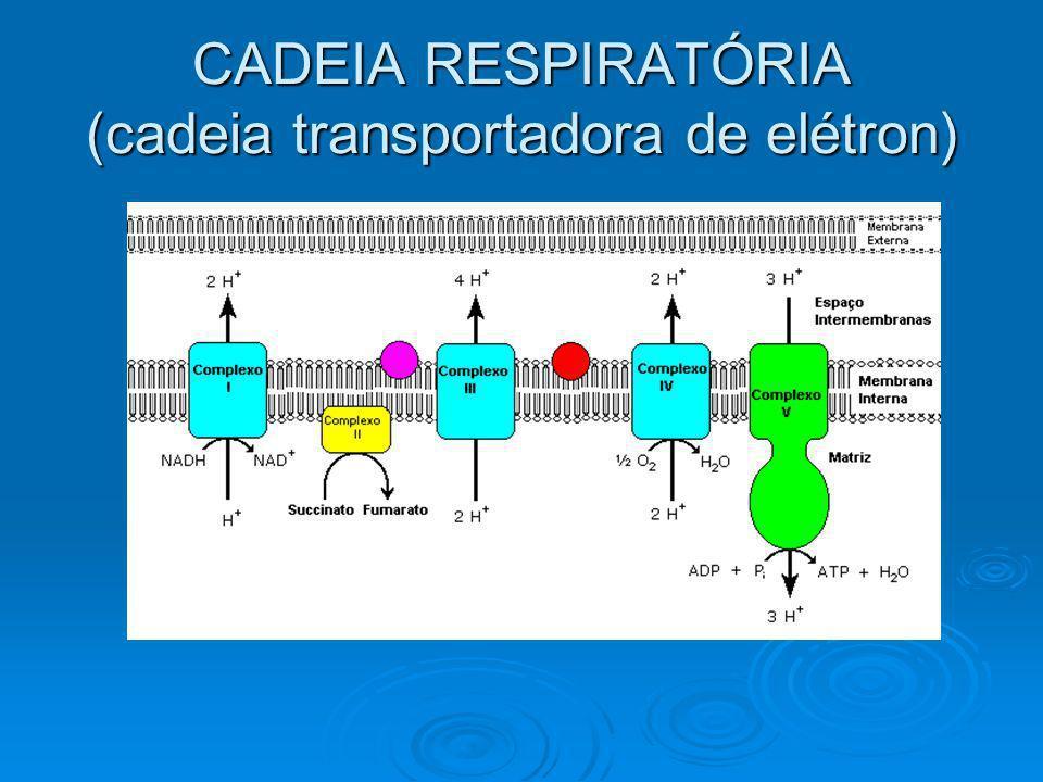 CADEIA RESPIRATÓRIA (cadeia transportadora de elétron)
