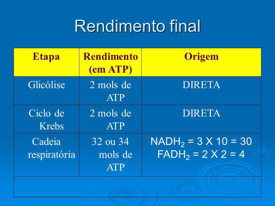 Rendimento final Etapa Rendimento (em ATP) Origem Glicólise