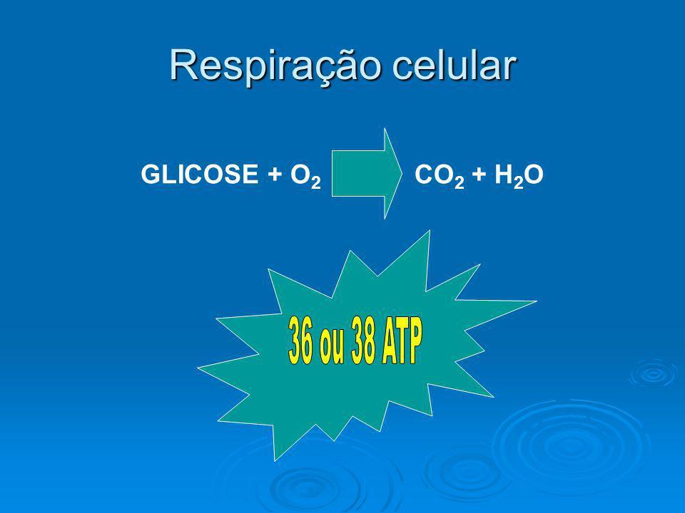 Respiração celular GLICOSE + O2 CO2 + H2O 36 ou 38 ATP