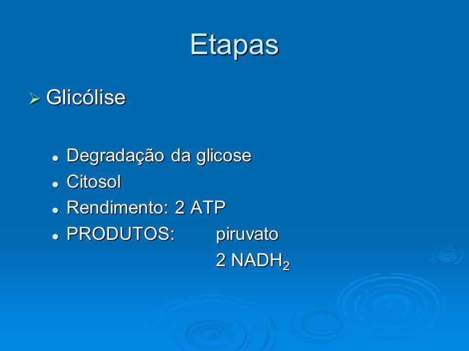Etapas Glicólise Degradação da glicose Citosol Rendimento: 2 ATP