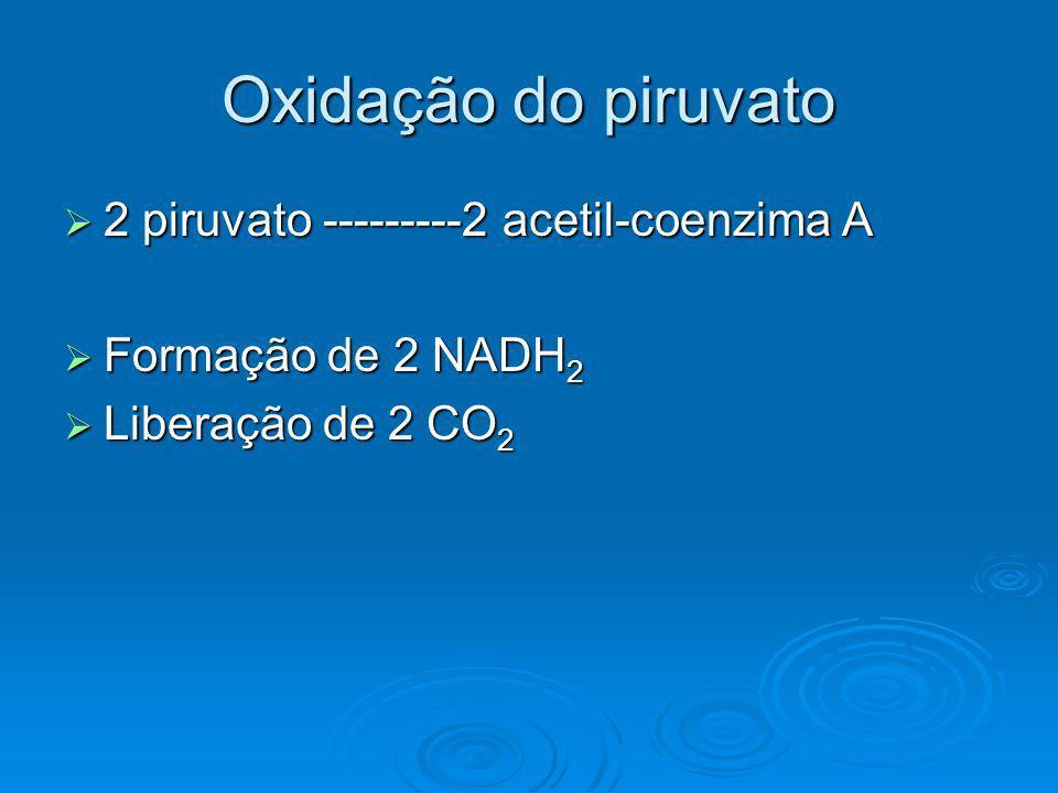 Oxidação do piruvato 2 piruvato ---------2 acetil-coenzima A