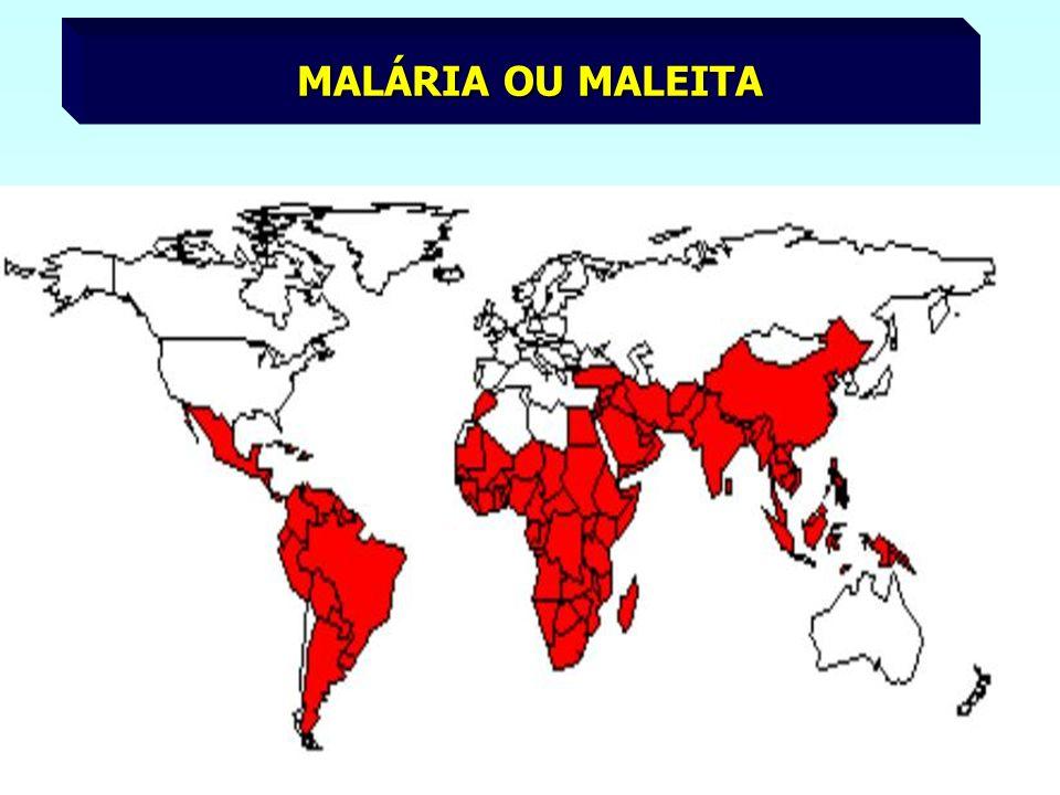 MALÁRIA OU MALEITA
