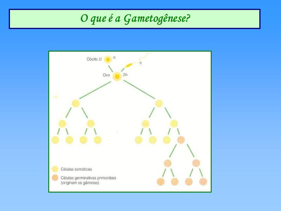 O que é a Gametogênese