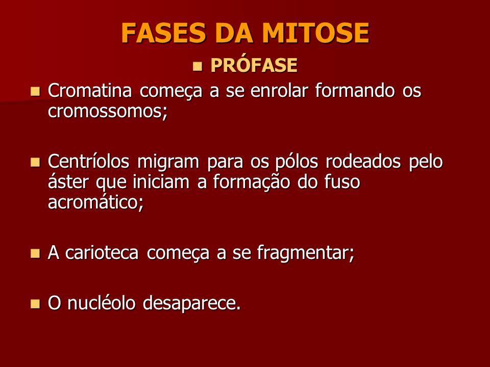 FASES DA MITOSE PRÓFASE