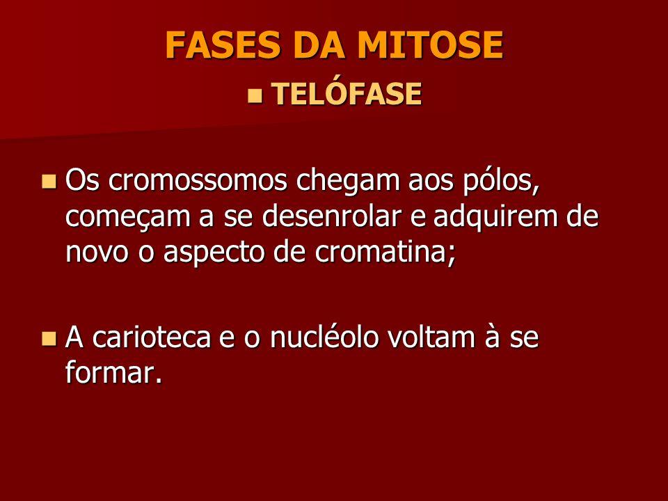 FASES DA MITOSE TELÓFASE