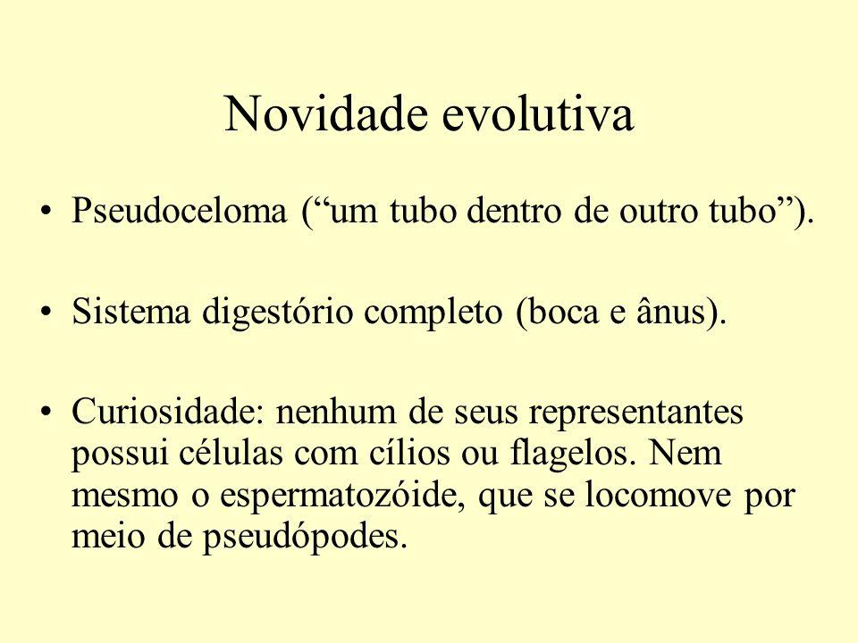 Novidade evolutiva Pseudoceloma ( um tubo dentro de outro tubo ).