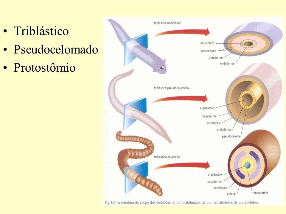 Triblástico Pseudocelomado Protostômio