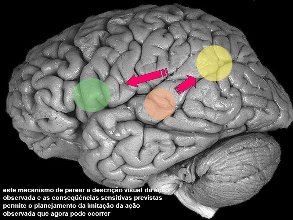 este mecanismo de parear a descrição visual da ação observada e as conseqüências sensitivas previstas permite o planejamento da imitação da ação observada que agora pode ocorrer