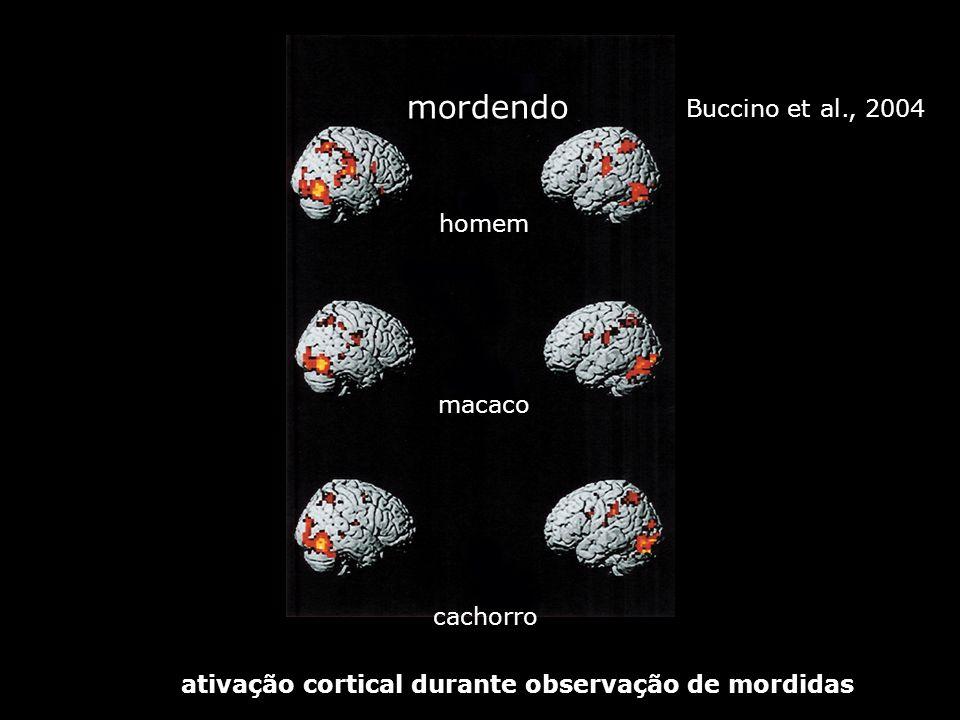 mordendo Buccino et al., 2004 homem macaco cachorro