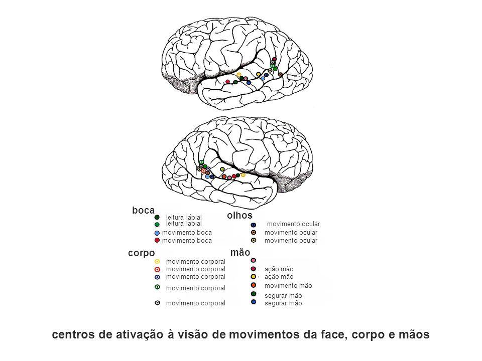 centros de ativação à visão de movimentos da face, corpo e mãos