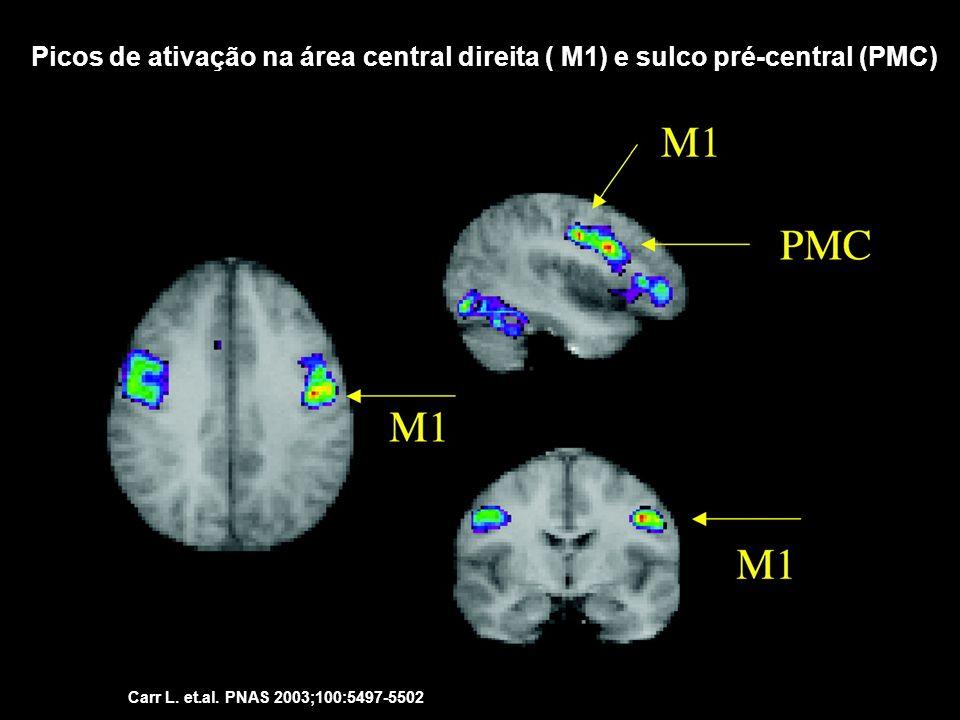 Picos de ativação na área central direita ( M1) e sulco pré-central (PMC)