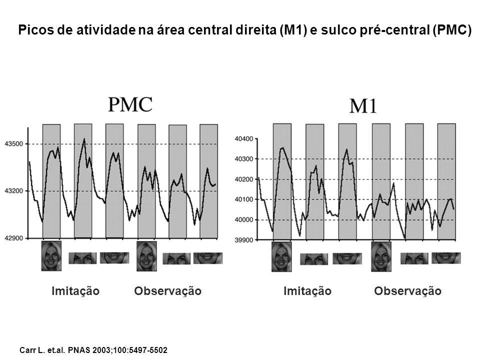 Picos de atividade na área central direita (M1) e sulco pré-central (PMC)