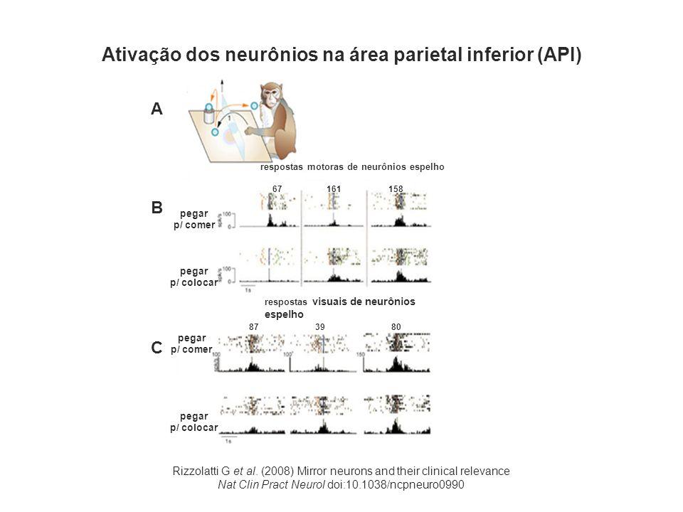 Ativação dos neurônios na área parietal inferior (API)