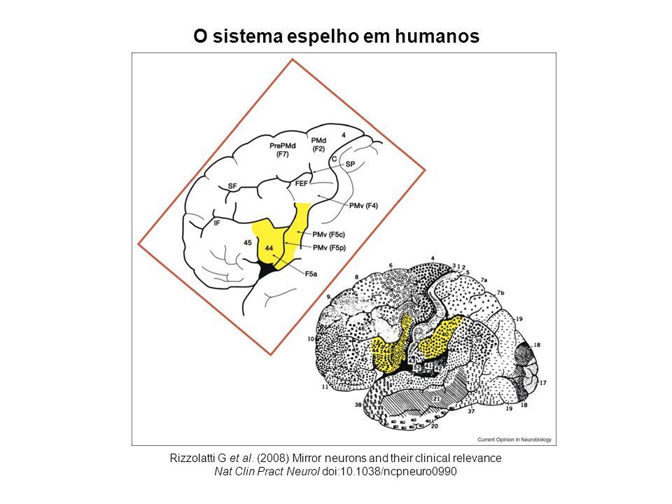 O sistema espelho em humanos