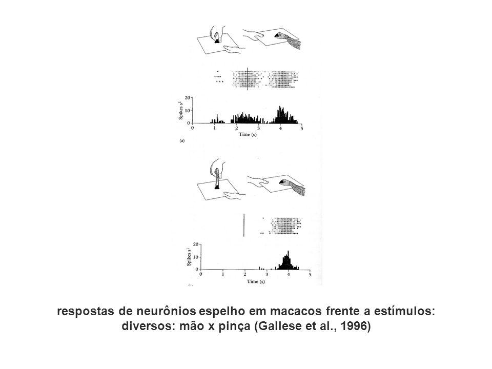respostas de neurônios espelho em macacos frente a estímulos:
