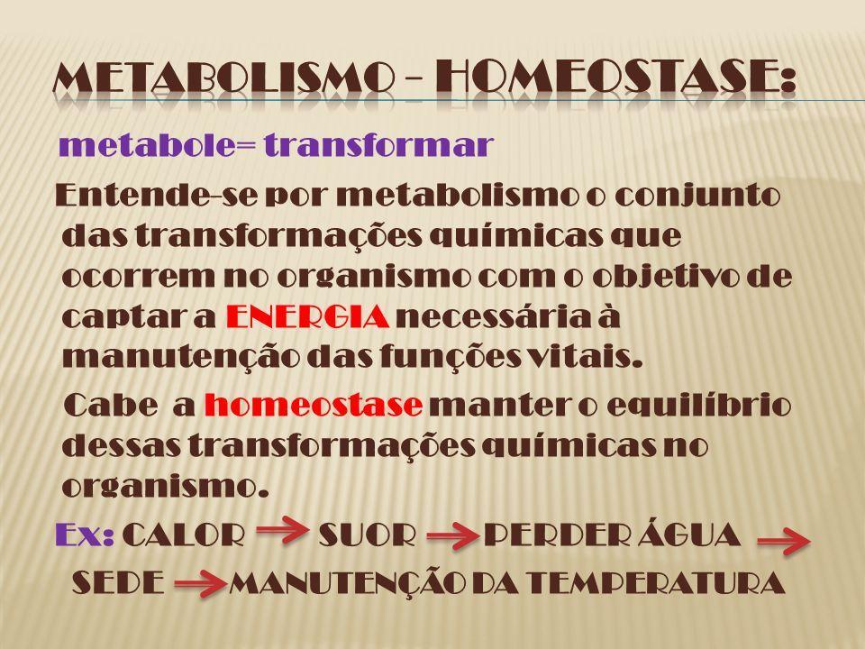 METABOLISMO - HOMEOSTASE: