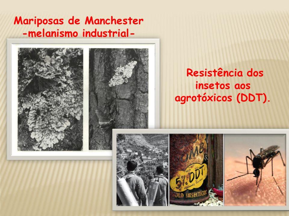 Mariposas de Manchester -melanismo industrial-