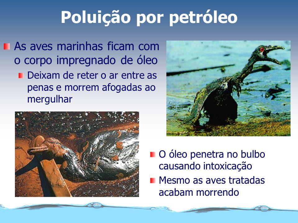Poluição por petróleoAs aves marinhas ficam com o corpo impregnado de óleo. Deixam de reter o ar entre as penas e morrem afogadas ao mergulhar.