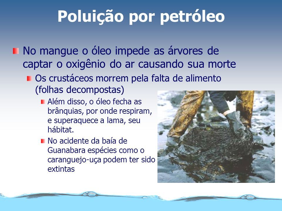 Poluição por petróleoNo mangue o óleo impede as árvores de captar o oxigênio do ar causando sua morte.