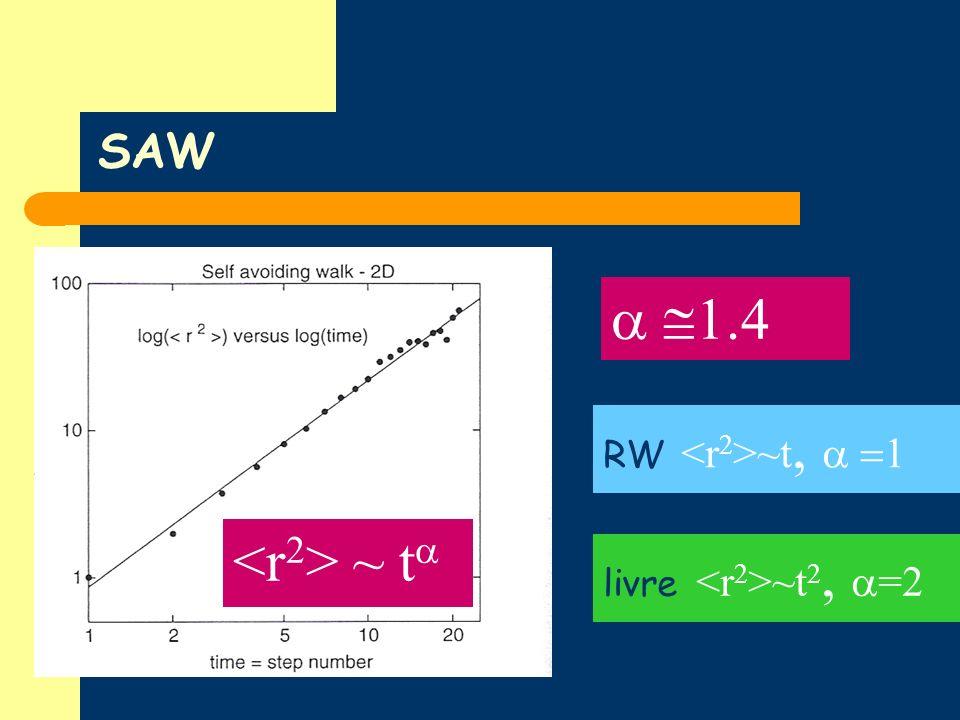 a @1.4 <r2> ~ ta SAW RW <r2>~t, a =1