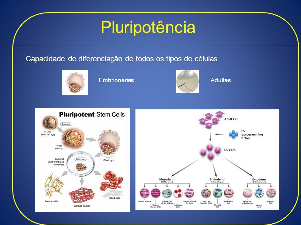 Pluripotência Capacidade de diferenciação de todos os tipos de células