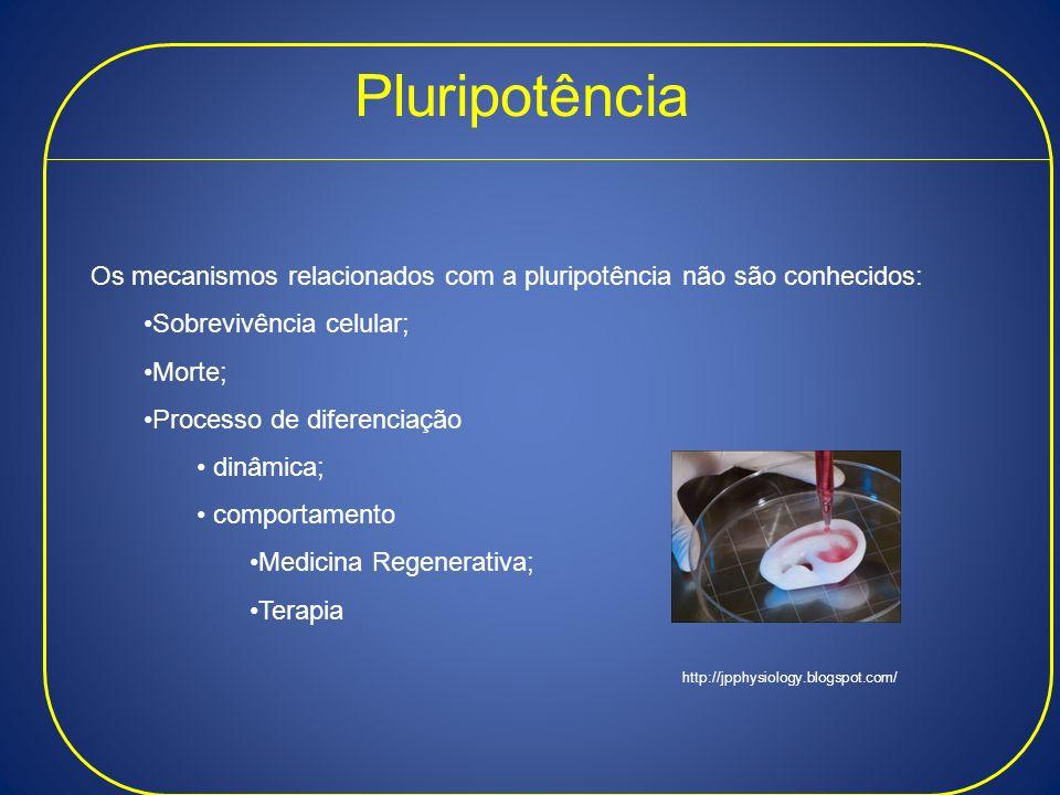 Pluripotência Os mecanismos relacionados com a pluripotência não são conhecidos: Sobrevivência celular;