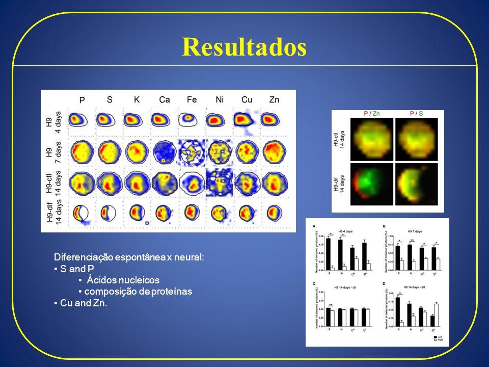 Resultados Diferenciação espontânea x neural: S and P Ácidos nucleicos