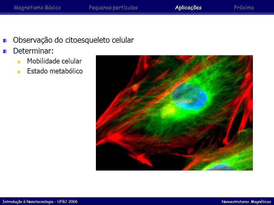 Observação do citoesqueleto celular Determinar: