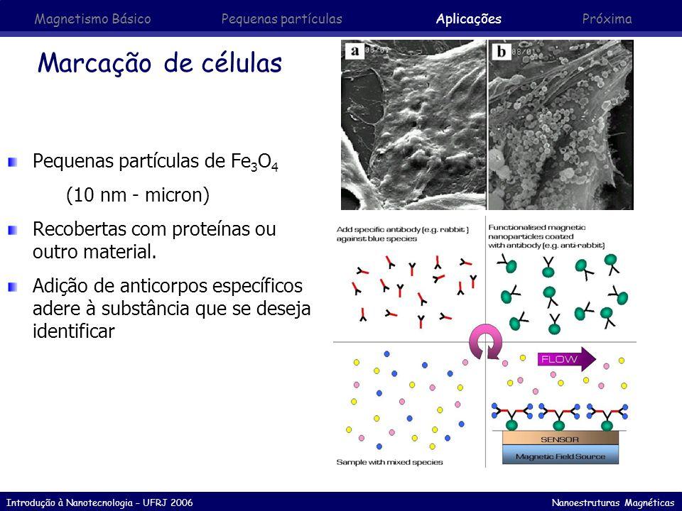 Marcação de células Pequenas partículas de Fe3O4 (10 nm - micron)